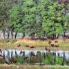 ৯ বছর পর বাইক্কা বিলে পরিযায়ী পাখির মেলা